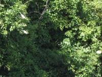 J'aime l'araignée cachée dans ce fouillis de branches et de feuilles.