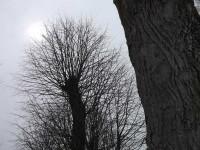 Colloque sentimental entre deux arbres nus, dépouillés par l'hiver.