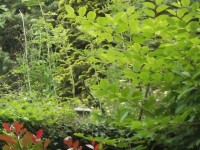 Cette nature est le reflet au printemps, avec ces branches et ses feuilles aux verts multipiés, telle qu'elle a été chantée par Albert Lozeau.