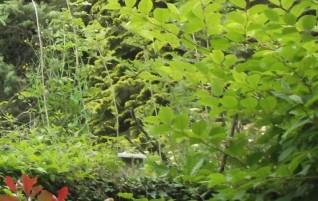 Deux poèmes d'Albert Lozeau : Première brise et Amour sylvestre