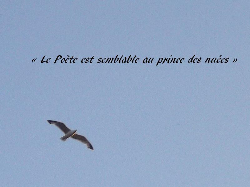 Lalbatros Les Fleurs Du Mal Charles Baudelaire