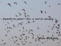 Sur l'azur, les oiseaux de passage forment un vol groupé, avec la légende : « Regardez-les passer ! Eux, ce sont les sauvages. »