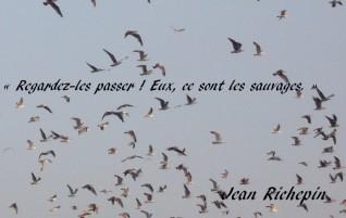 Les oiseaux de passage – Jean Richepin