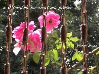 Roses cachées derrière un moucharabié éclairées par l'amour secret du soleil.