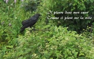 Il pleure dans mon cœur – Romances sans paroles – Paul Verlaine