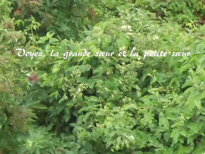 Mes Deux Filles Les Contemplations Victor Hugo
