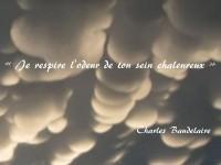 Sous des rondeurs contonneuses apparaît le vers : « Je respire l'odeur de ton sein chaleureux », extrait de Parfum exotique de Baudelaire.