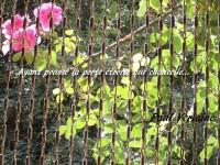 Trois roses écloses de la branche d'un rosier penchent devant la porte fermée par un rideau de jonc tressé.