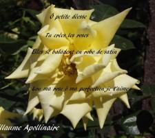 Lou ma rose – Poèmes à Lou – Guillaume Apollinaire