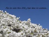 Cette image représente des fleurs de cerisier sous un ciel bleu éclatant dans lequel on peut lire : « Par les soirs bleus d'été, j'irai dans les sentiers ». Le nom du poète apparaît en bas à droite, noir parmi les fleurs blanches : Arthur Rimbaud.