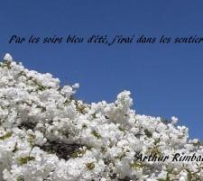Sensation – Poésies – Arthur Rimbaud